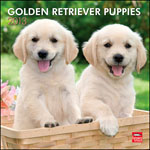 Golden Retriever Puppies 2013 Wall Calendars
